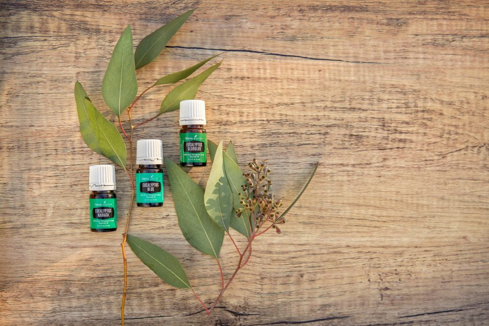 eucalyptus oil with eucalyptus plants on a natural background