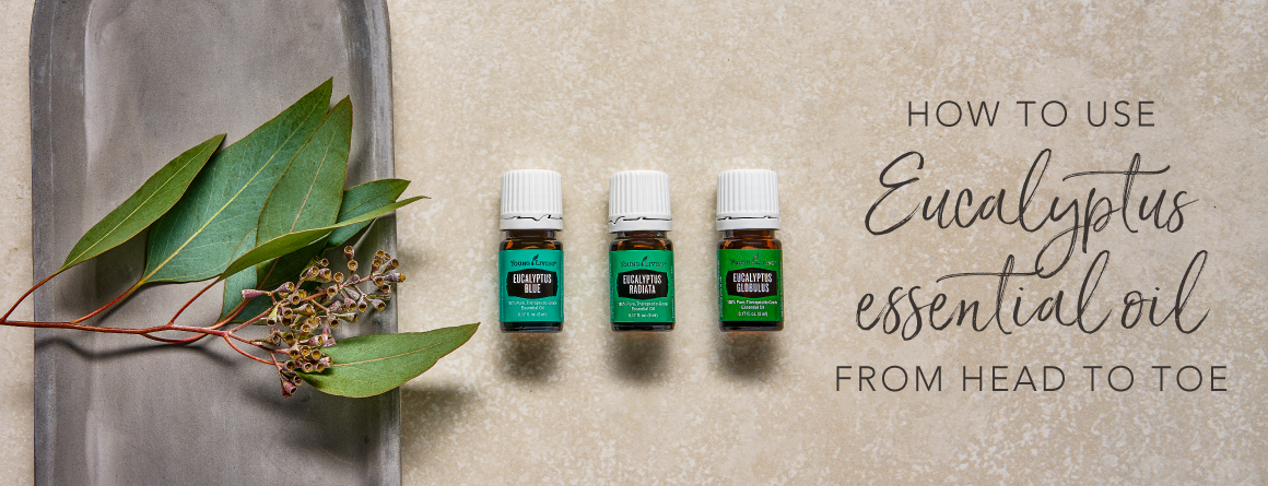 three bottles of eucalyptus oil with eucalyptus plants