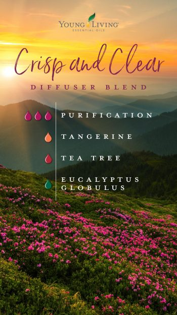 crisp and clear diffuser blend: 3 drops Purification, 1 drop tangerine, 1 drop tea tree, 1 drop eucalyptus
