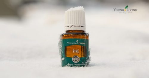 Pine essential oil in the snow