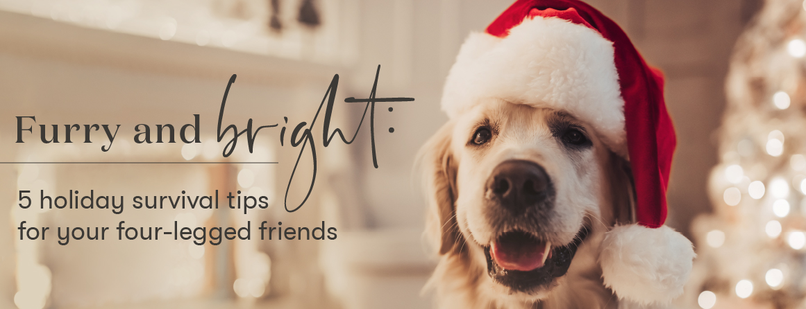 Furry and Bright: 5 holiday survival tips for your four legged friend; dog with Santa hat