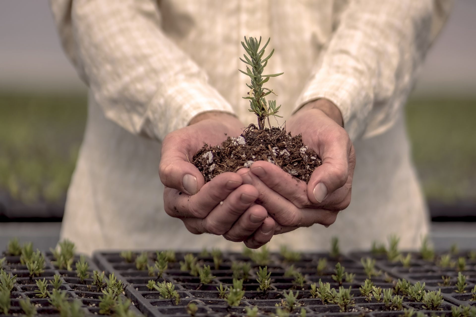 Man holding Lavender seedling-Farm facts: Quality essential oils from the ground up-Young Living Lavender Life Blog